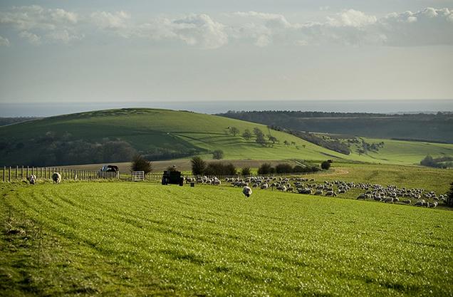 harrowhill